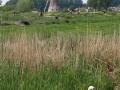 nesting-goose