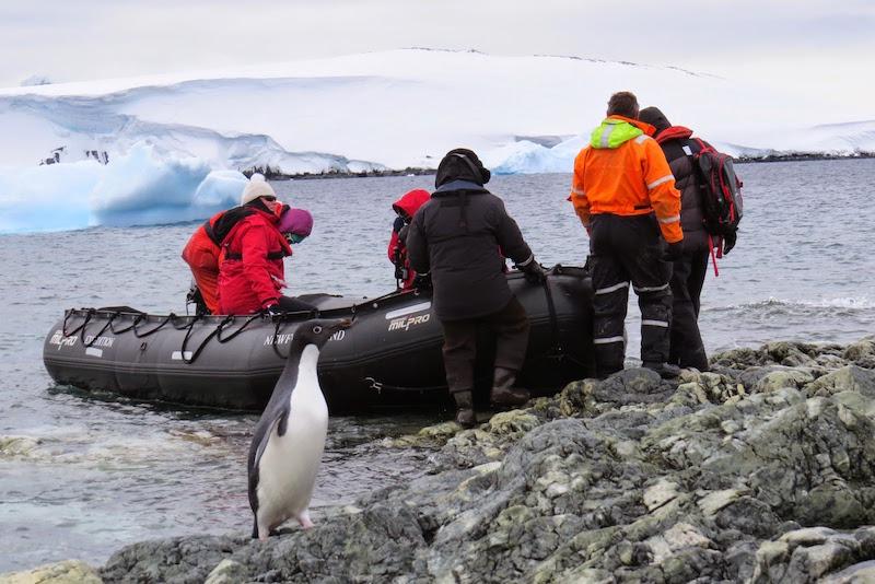 antarctica-adelie-penguin-by-zodiac