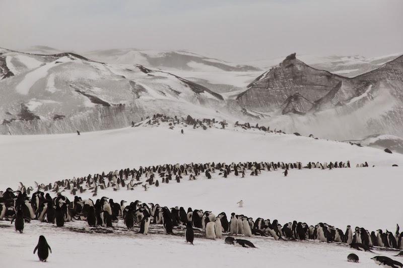 antarctica-baily-head-penguins
