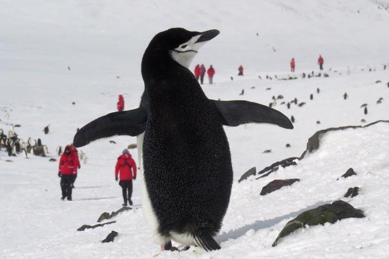 antarctica-penguin