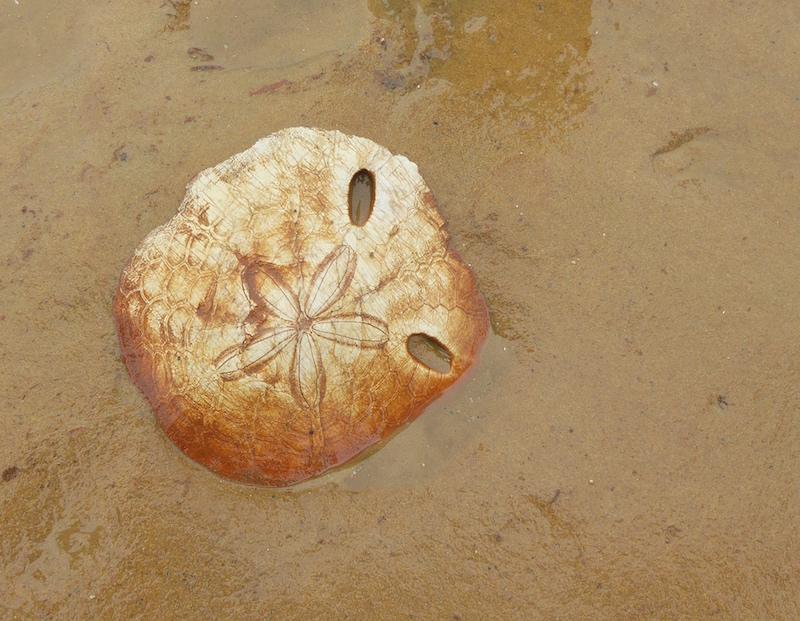 yehliu-sea-urchin-fossil
