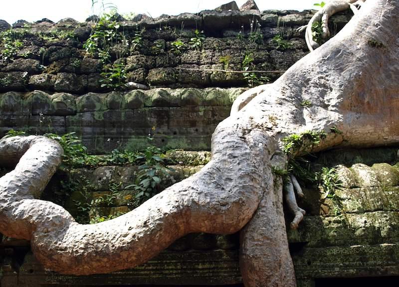 Cambodia-Ta-Prohm-roots
