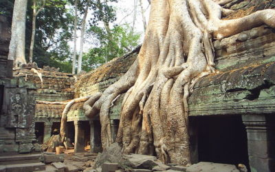 Cambodia's Ta Prohm: Angkor's jewel
