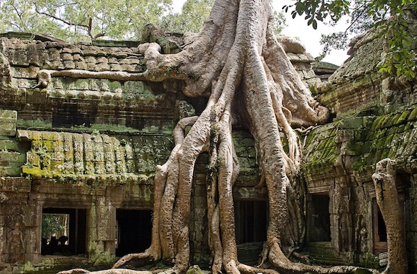 ta-prohm-giant-tree