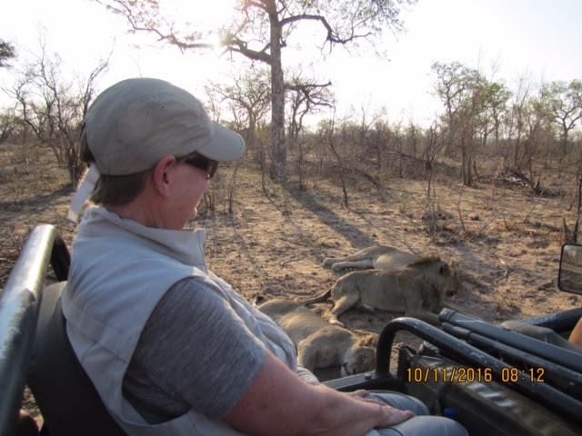 game-drive-lions-safari-africa